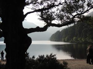 Glendalough pregnant tree at lake