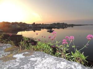 Kinvarra Flowering sunset 2